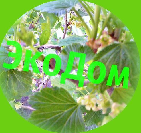 Экодом11 -